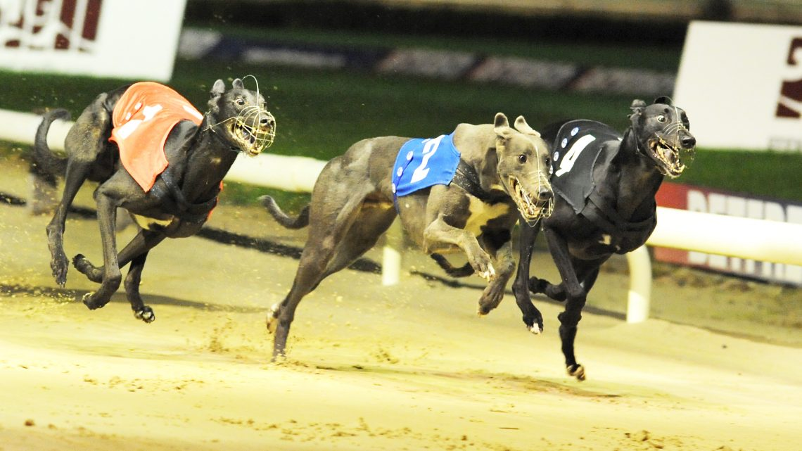 Perfectly located in the heart of the country, with excellent access to all major transport networks, Nottingham Greyhound Stadium is quite simply the home of greyhound racing in the East Midlands.