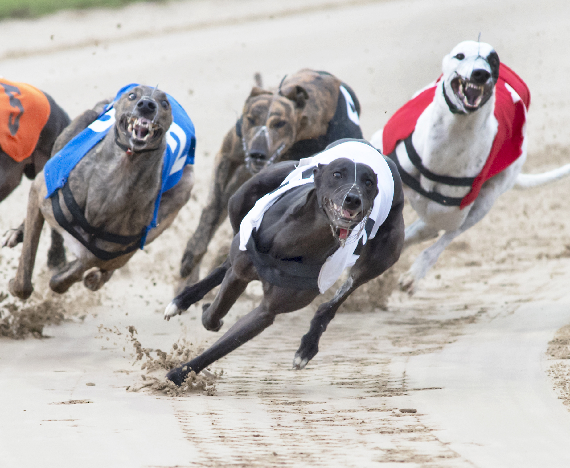Monmore puppy derby 2021 betting corral betting